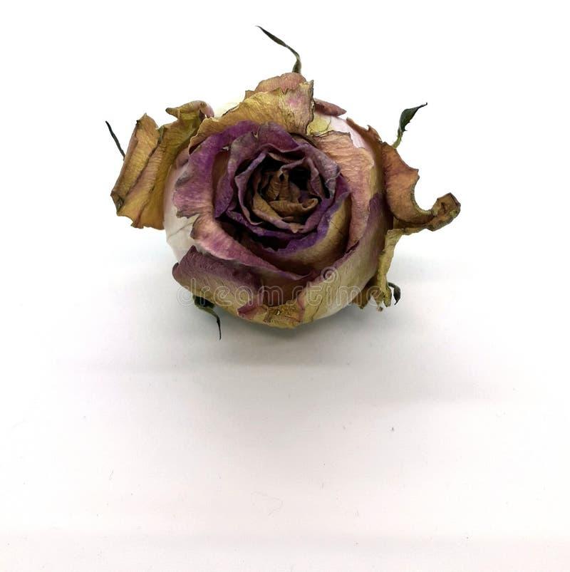 ый цветок стоковое изображение rf