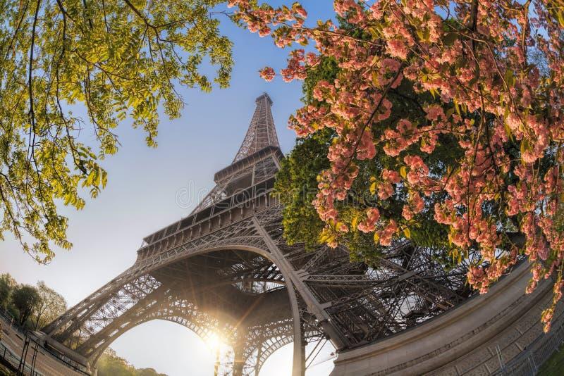 Эйфелева башня с весенними деревьями в Париже, Франция стоковая фотография rf