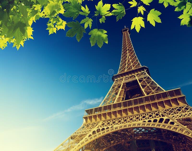 Эйфелева башня в лете стоковые фото