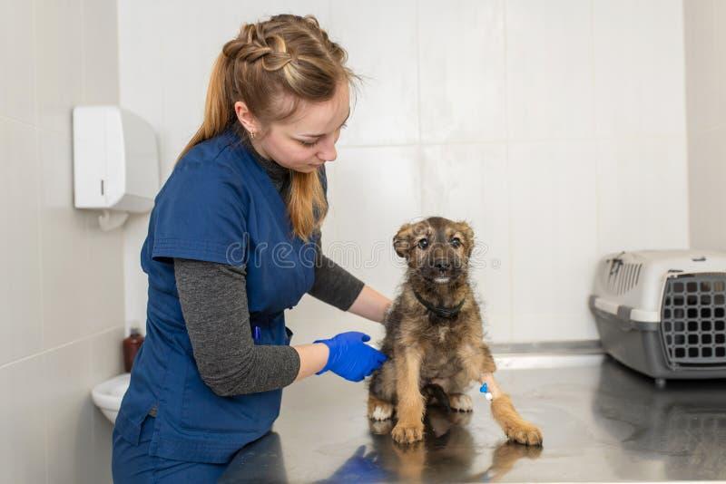 Экзамена доктора маленькой девочки щенок зооветеринарного счастливый стоковые фотографии rf