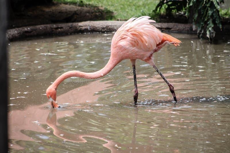 Экзотическая питьевая вода птицы стоковое изображение rf