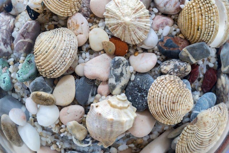 Экзотическая поверхность дно моря стоковые фото