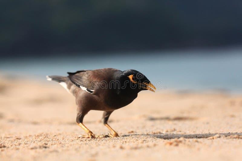 Экзотическая птица идя вперед на пляж стоковые фото