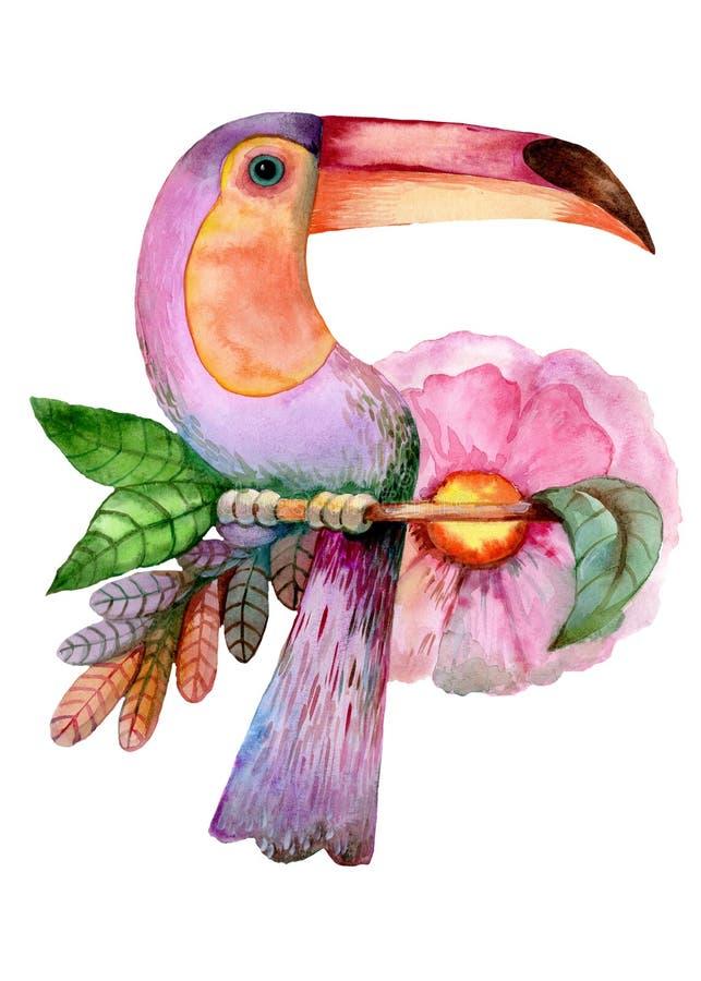 Экзотическая птица на белой предпосылке бесплатная иллюстрация