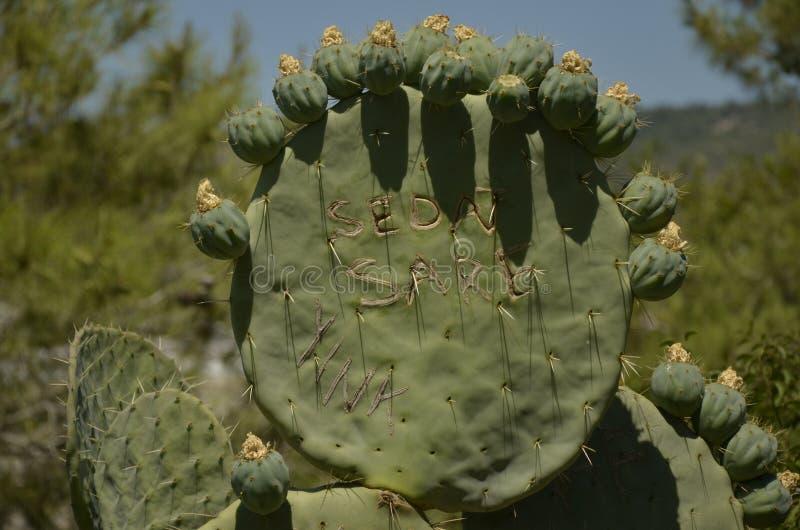 Экзотическая Турция - съестной кактус стоковое изображение rf