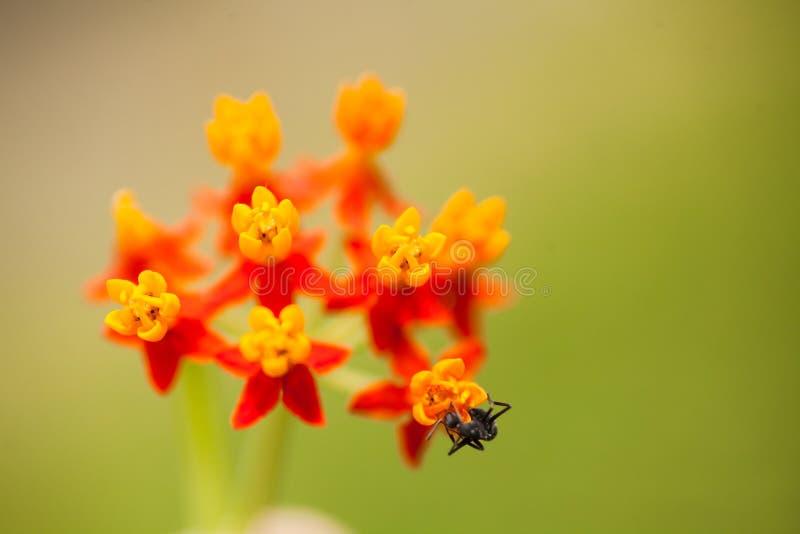 Экзотические дикие цветы стоковая фотография