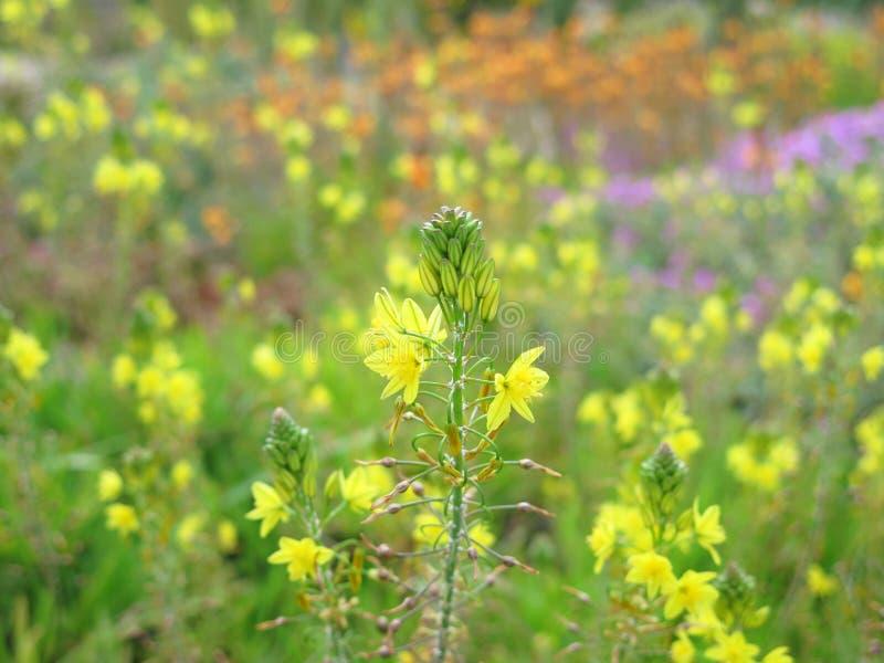Экзотические желтые цветки стоковые фотографии rf