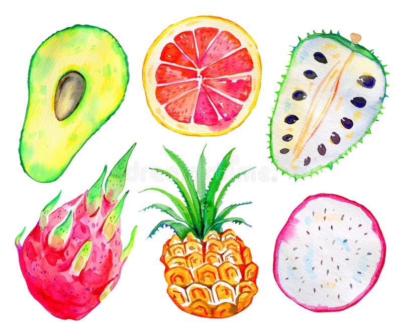 экзотические плодоовощи Авокадо, pitahaya, ананас, цитрус, annona Нарисованный рукой комплект акварели иллюстрация вектора