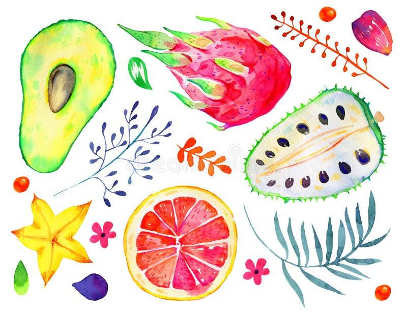 Экзотические плоды и декоративные цветки Цитрус, авокадо, pitahaya, карамбола, annona Нарисованный рукой комплект акварели бесплатная иллюстрация