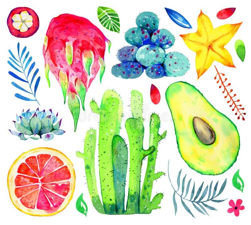 Экзотические плоды, succulents и декоративные цветки Авокадо, pitahaya, цитрус, мангустан, карамбола Нарисованный рукой комплект  иллюстрация вектора