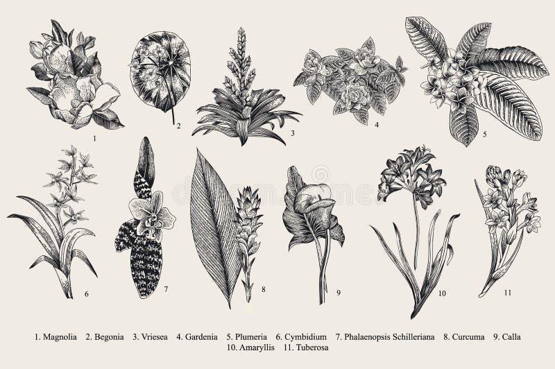 Экзотические установленные цветки Ботаническая иллюстрация года сбора винограда вектора иллюстрация вектора