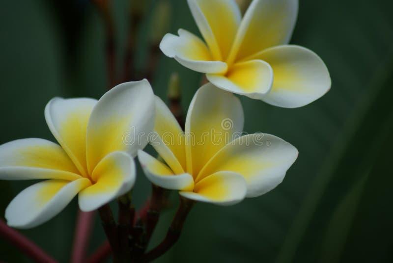экзотические цветки в Кипре стоковое фото