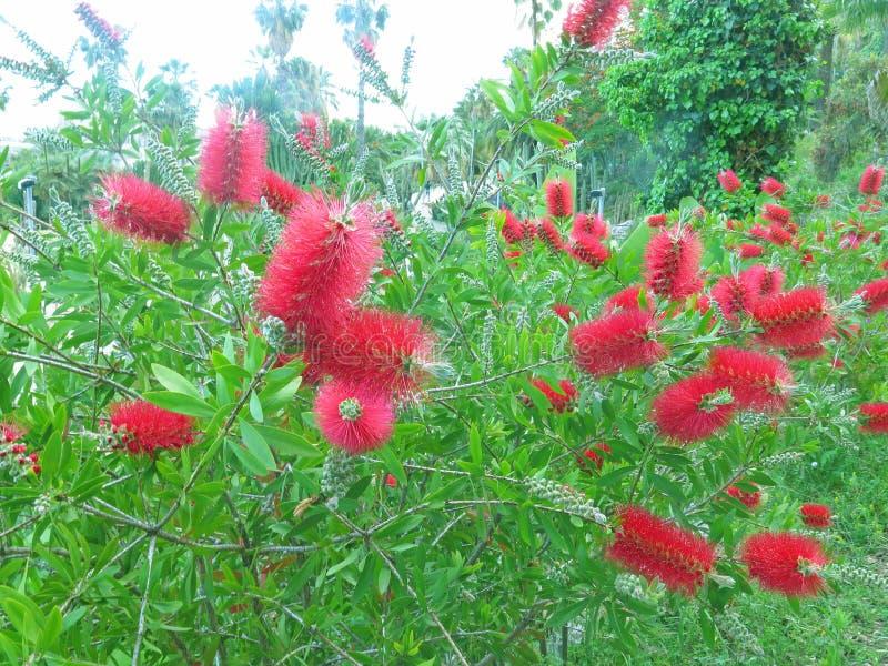 экзотические цветки красные стоковые изображения rf