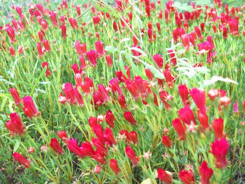 экзотические цветки красные стоковое фото rf