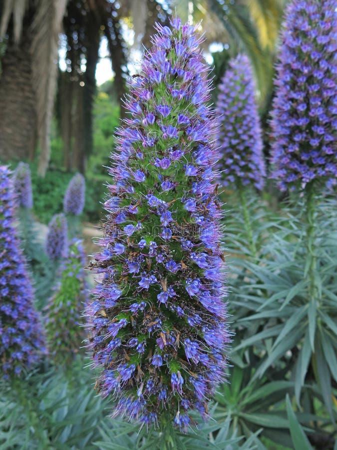 Экзотические цветки сирени стоковые фото
