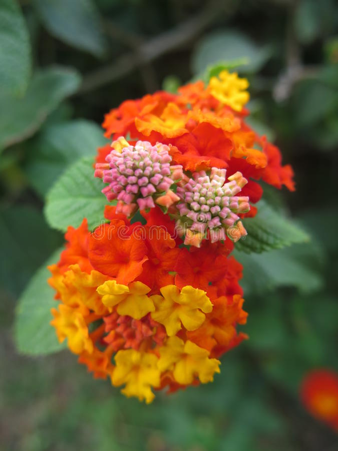 экзотические цветки стоковое изображение rf