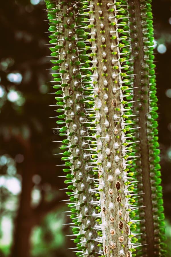Экзотический кактус стоковая фотография