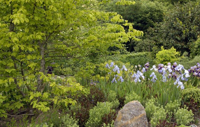 Экзотический сад в morroco стоковые фотографии rf