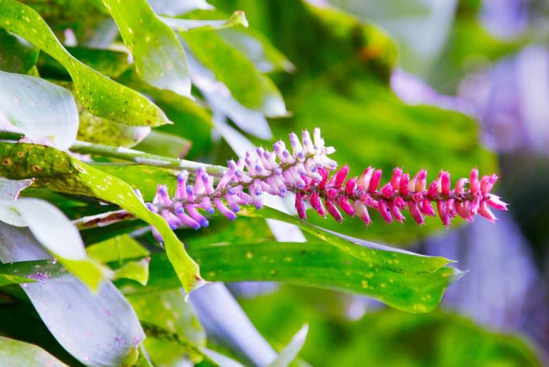 Экзотический цветок в саде стоковое фото rf