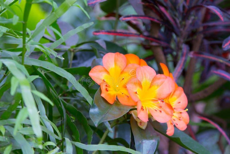 Экзотический цветок в саде стоковое изображение