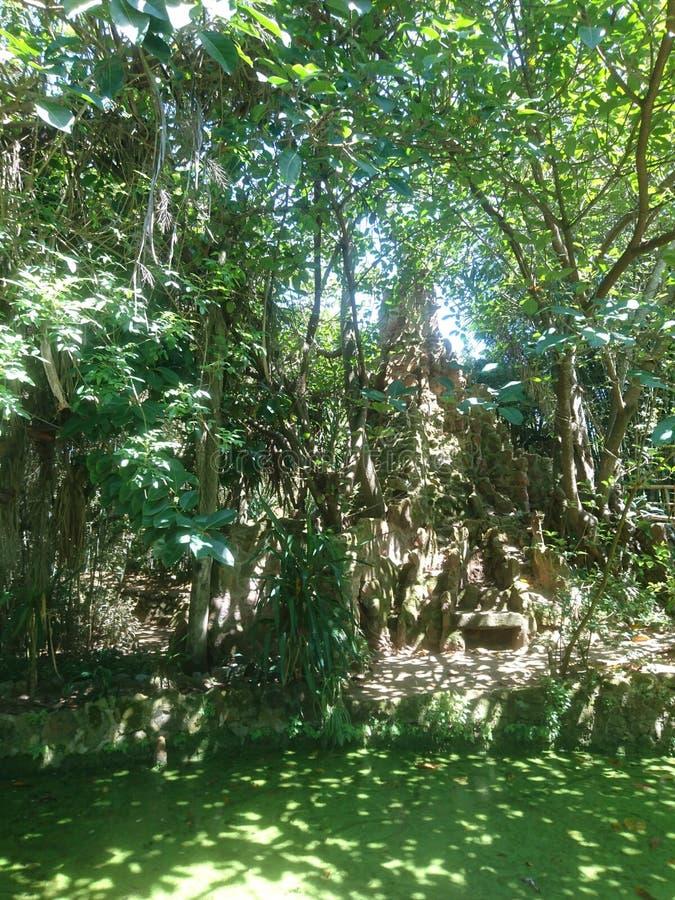 Экзотическое parc стоковое фото