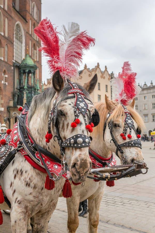 Экипажи лошадей на главной площади вызвали Rynek Glowny в Краков стоковое изображение rf