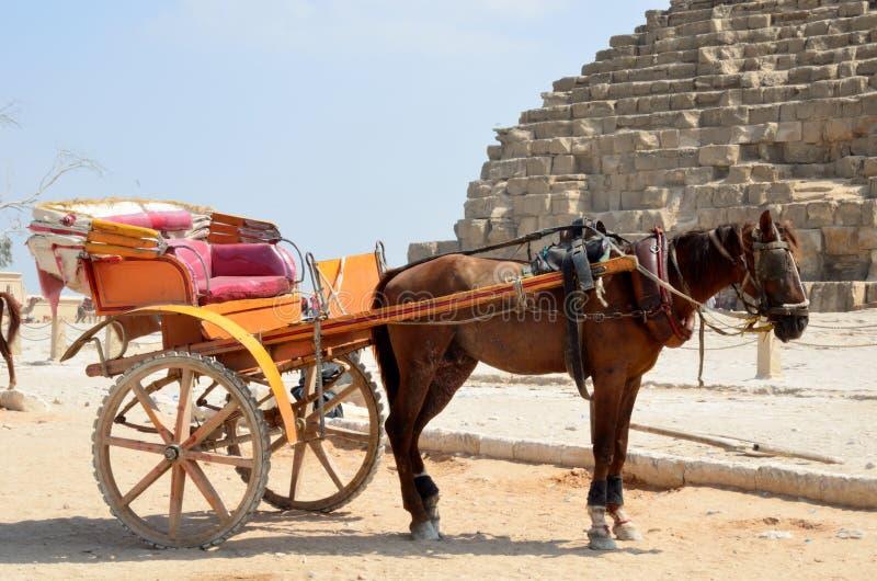 Экипажи нарисованные лошадью в Гизе стоковая фотография rf