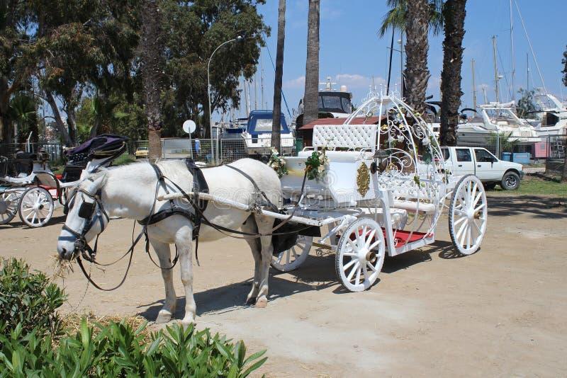 Экипажи свадьбы в стиле Золушкы в Ларнаке, Кипре стоковые изображения rf