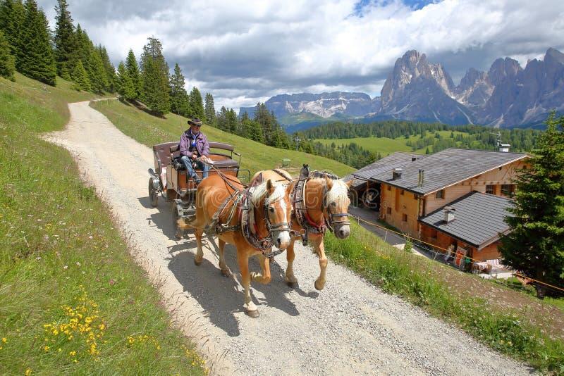 Экипаж с лошадями Haflinger в Alpe de Siusi над Ortisei с горами Sassolungo и Sassopiatto на заднем плане стоковая фотография