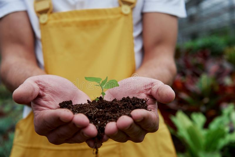 Экологическая концепция Менсы держат землю за руки, а растение в середине мало стоковые фотографии rf