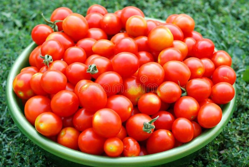 Экологические томаты вишни в тазике стоковое фото