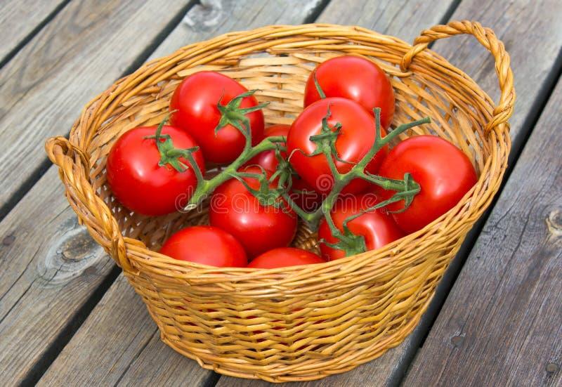 экологические томаты Стоковые Фотографии RF