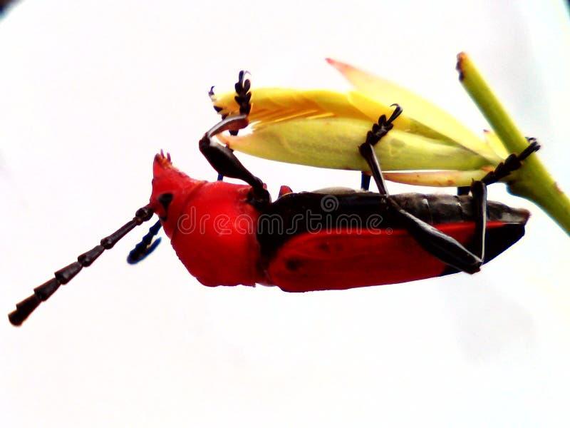 Экологическое насекомое стоковая фотография