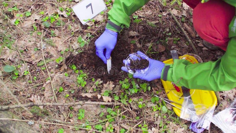 Эколог ученого в лесе беря образцы почвы стоковое фото