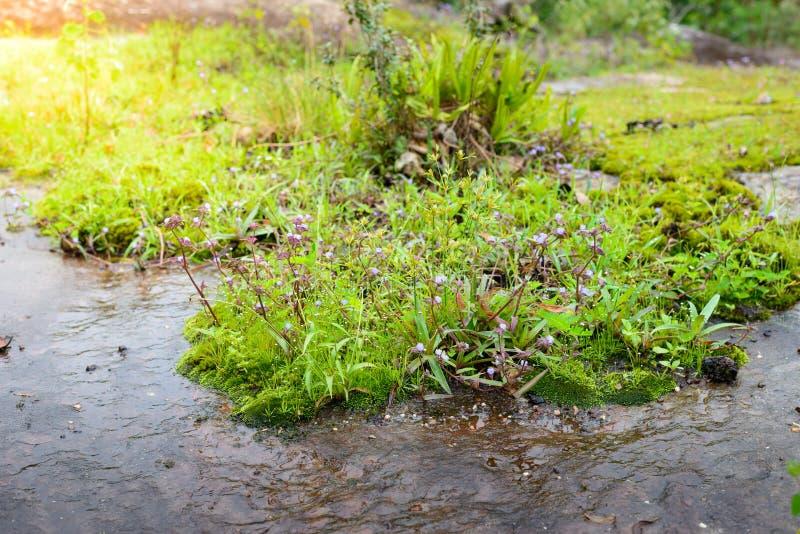Экосистемы и цветок заводов внутри стоковое фото