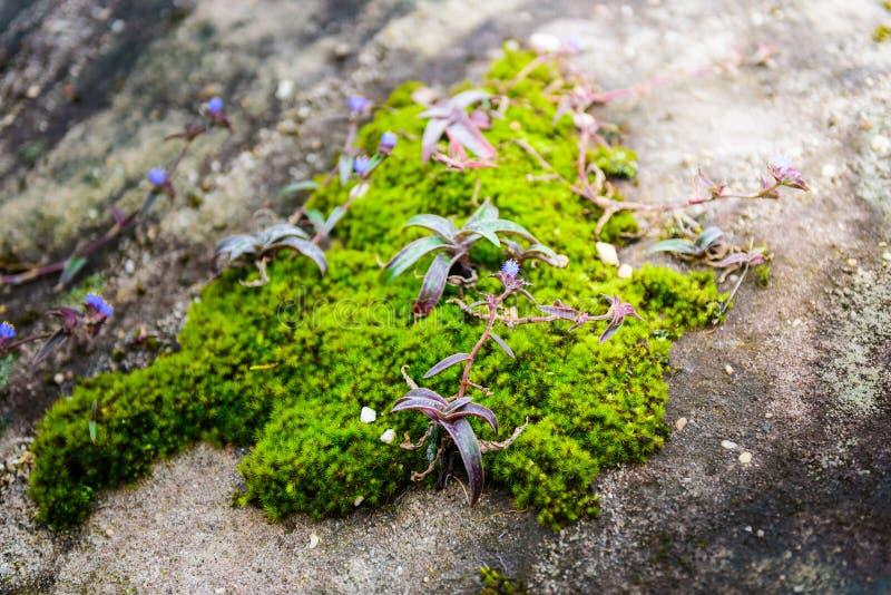Экосистемы и цветок заводов внутри стоковые фото