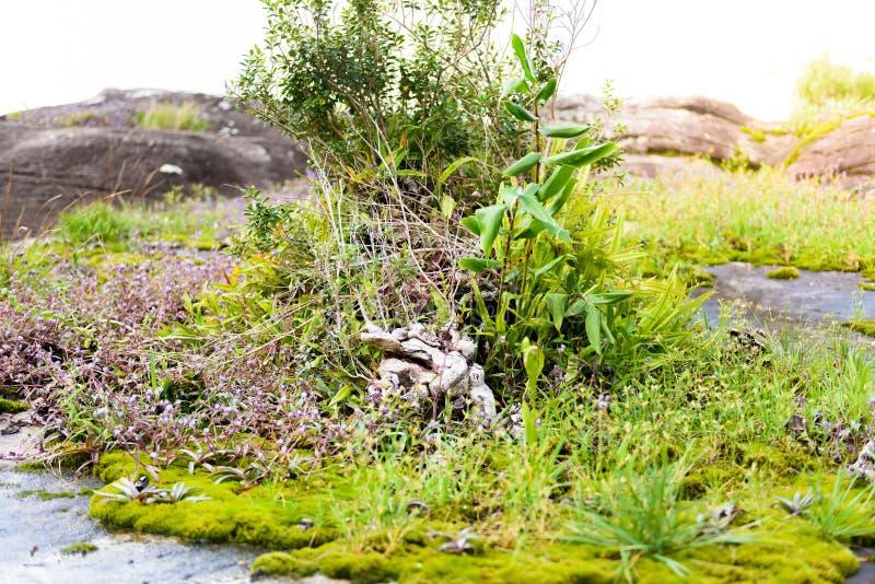 Экосистемы и цветок заводов внутри стоковое изображение rf