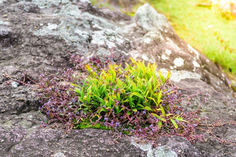 Экосистемы и цветок заводов стоковое фото rf
