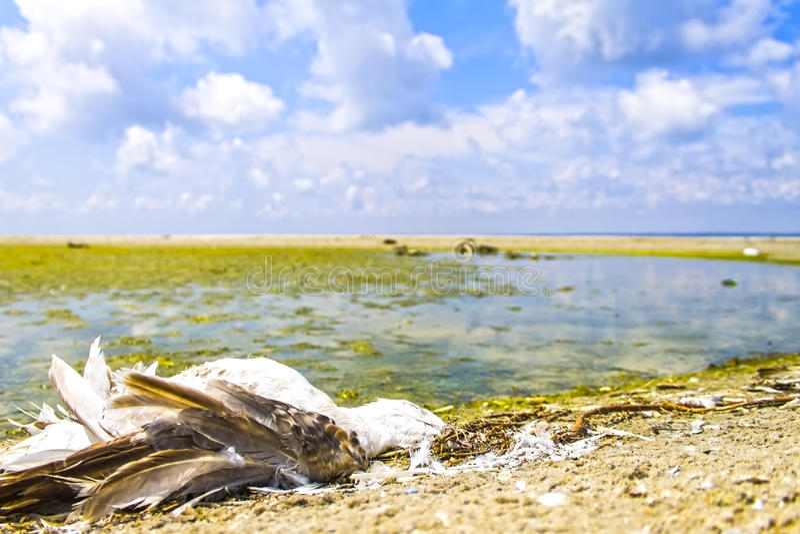 Экологическая катастрофа, вымирание птиц, нефтяное пятно, предпосылка природы стоковые изображения rf