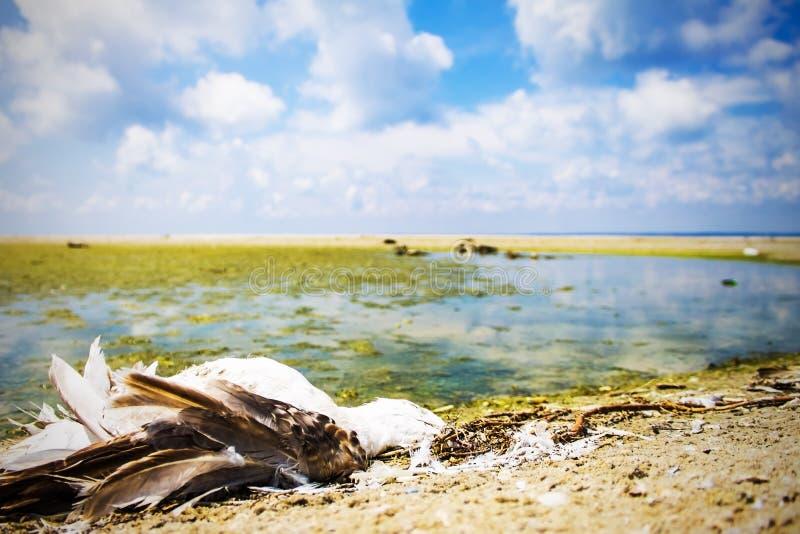 Экологическая катастрофа, вымирание птиц, нефтяное пятно, предпосылка природы стоковые изображения