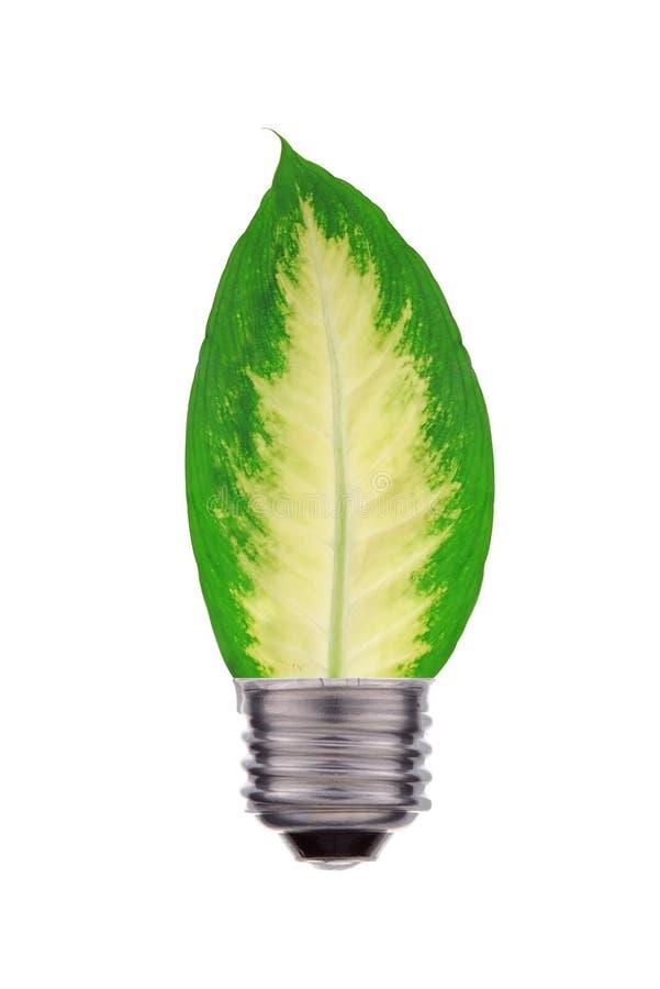 Экологическая концепция, лист и лампа смешивают совместно изолированный на белизне стоковое фото rf