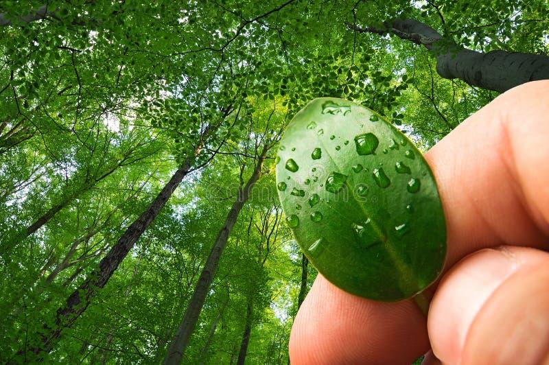 Экологичность природы, консервация леса стоковое изображение rf
