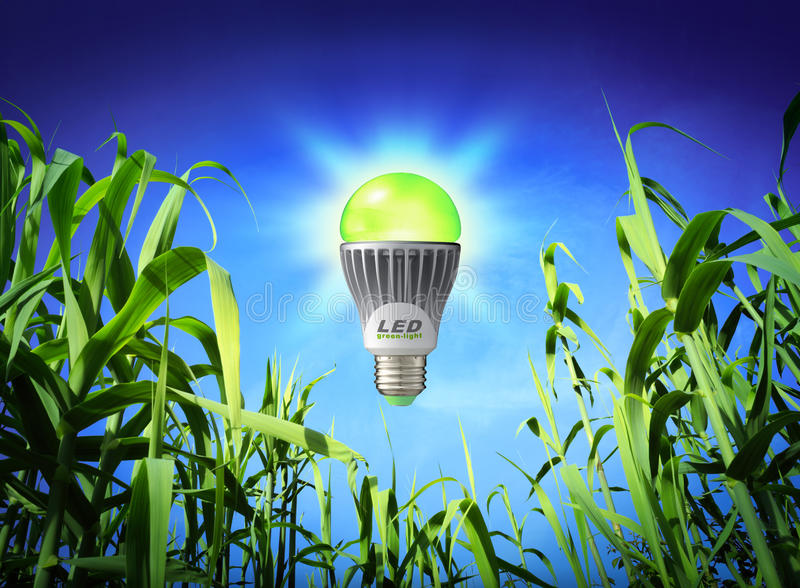 Экологичность роста - лампа приведенная - зеленое освещение стоковая фотография rf