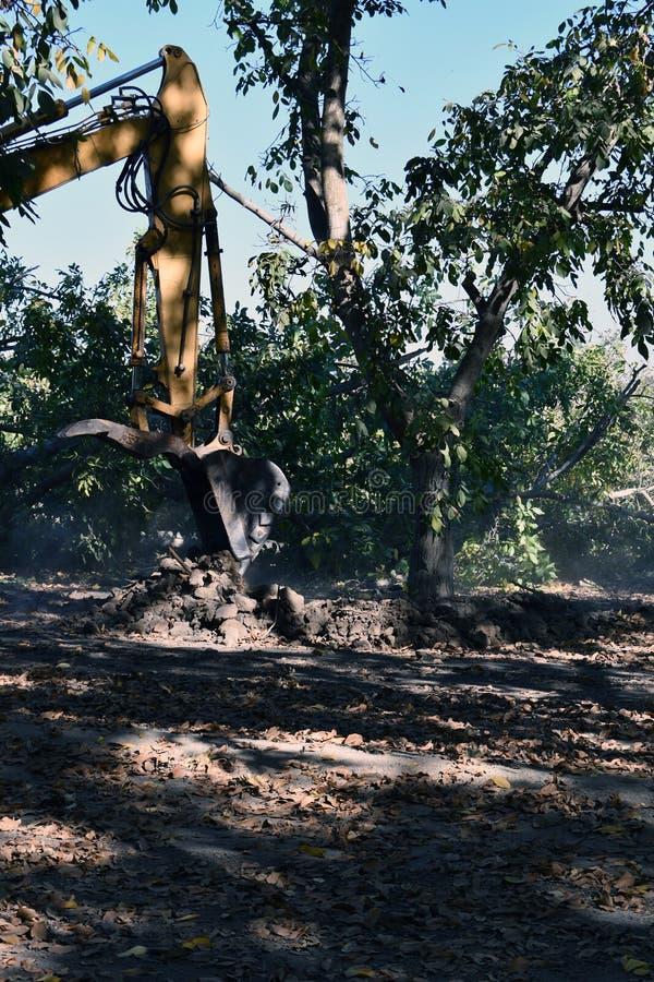 Экскаватор используемый для того чтобы выкопать вверх дерево стоковая фотография