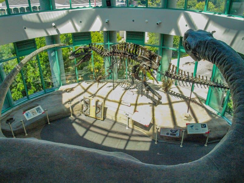 Экспонат динозавра в музее Северной Каролины естественных наук стоковые фото