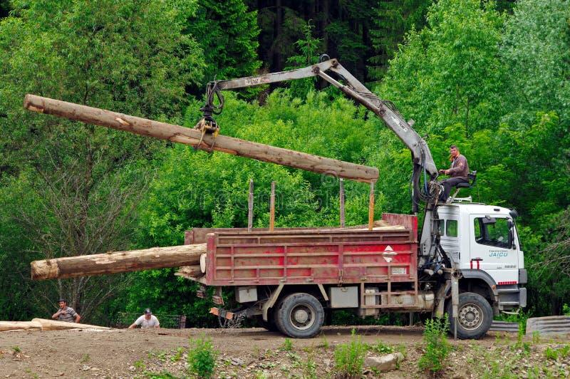 Эксплуатирование леса стоковая фотография