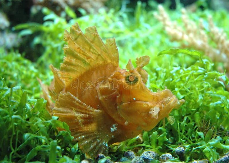 эксцентричные рыбы стоковая фотография rf