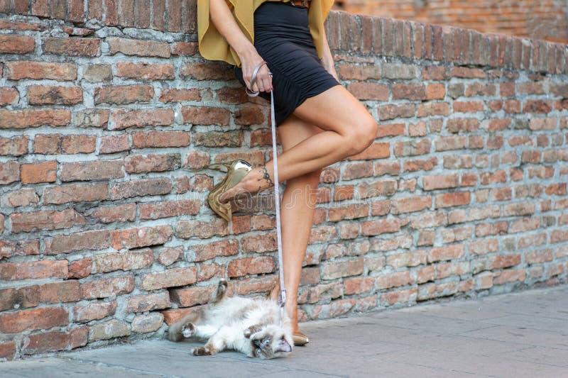 Элегантная итальянская женщина с шляпой держит кота на поводке стоковое изображение rf