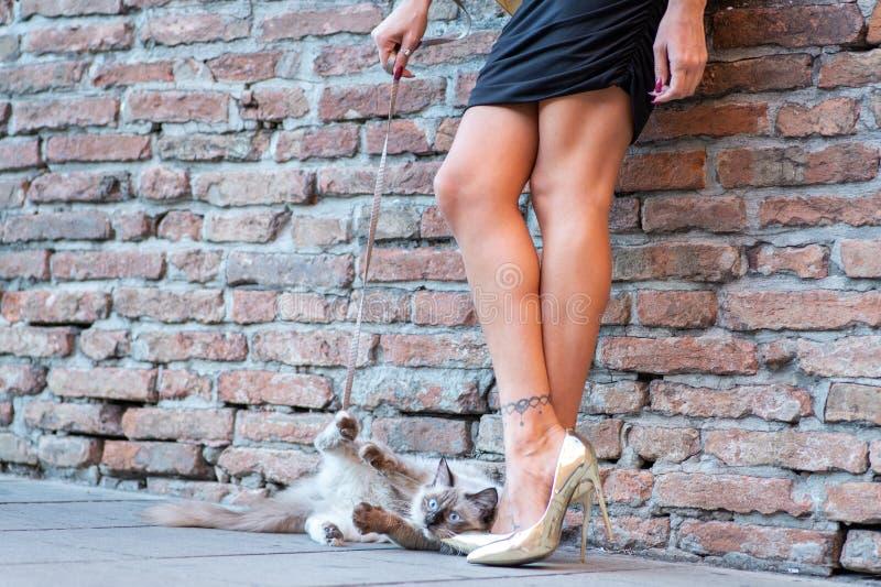 Элегантная итальянская женщина с шляпой держит кота на поводке стоковые фото