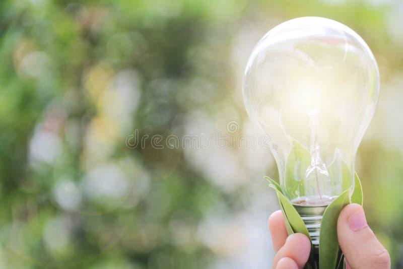 Электрическая лампочка владением руки ` s ребенка, энергия на жизнеспособное будущее стоковые фотографии rf
